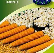 Seminte porumb popcorn Kremgolyo 50 seminte