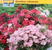 Seminte flori Garoafe chinezesti (Dianthus chinensis) Single Mix 0.5g