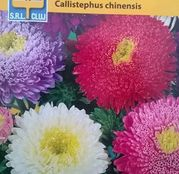 Seminte flori Ochiul Boului Giants Mix (Callistephus chinensis) 0.5g