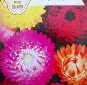 Seminte flori Flori de Paie (Helichrysum bracteatum) Dwarf Mix 0.5g