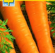 Seminte morcovi Berlikumer (3g)