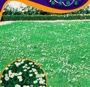 Seminte flori Banutei (Bellis perenis) flori simple 0.20g