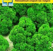 Seminte patrunjel frunze Moss curles 2g