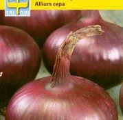 Seminte Ceapa rosie Braunshweig 3g