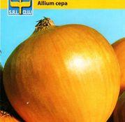 Seminte ceapa Romata di Milano 2g