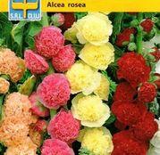 Seminte flori Nalba (Althea rosea) amestec de culori 0.5g