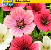 Seminte flori Nalba decorativa (Malope trifida) amestec de culori