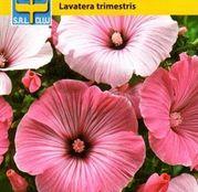 Seminte flori Nalba (Lavatera trimestris) amestec de culori