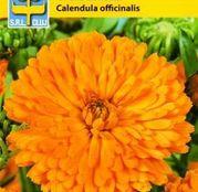 Seminte flori Galbenele Prinzess Mix (Calendula officinalis) 1g