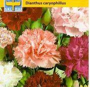 Seminte flori Garoafe Chaubaud (Dianthus caryophyllus) amestec de culori 0.20g