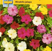 Seminte flori Frumoasa noptii (Mirabilis jalapa) 1g