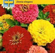 Seminte flori Carciumarese (Zinnia elegans) Dahlia Flowered Mix 1g