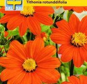 Seminte flori Titonia Orange/ Tithonia Torch (Tithonia rotundifolia) 1g