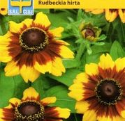 Seminte flori Rudbechia Gloriosa Daisy Mix (Rudbeckia hirta) 1g