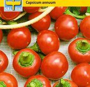 Seminte Ardei iute Red Hot Cherry Small 0,5g