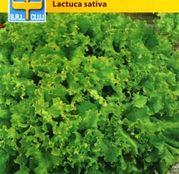 Seminte Salata creata Lollo Bionda 1g