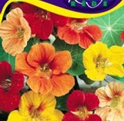 Seminte flori Coltunasi mari (Tropaeolum majus) amestec de culori 3g