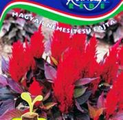 Seminte flori Creasta Cocosului (Celosia argentea plumosa) Bikaver 0.5g