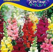 Seminte flori Gura leului (Antirrhinum majus) amestec de flori 0,50g
