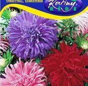 Seminte flori Ochiul boului (Callistephus chinensis) Straussenfeder - amestec de culori 1g