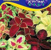 Seminte flori Urzica decorativa (Coleus blumei) amestec de culori 0.25g