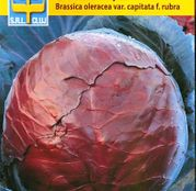 Seminte Varza rosie Dauerrot 2g