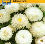 Seminte flori Banutei (Bellis perennis) White 0.5g