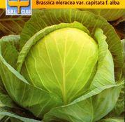Seminte Varza de toamna Buzoiana 2g