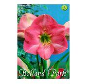 Bulbi de flori Hippeastrum Amaryllis Roz 1buc