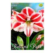 Bulbi de flori Hippeastrum Amaryllis Striped 1buc