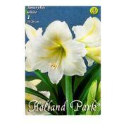 Bulbi de flori Hippeastrum Amaryllis Alb 1buc