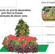 Seminte flori pentru amenajare rondou: Ochi negri, Muscate si Urzici decorative