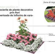 Seminte flori pentru amenajare rondou: dalii, begonii si lilicele