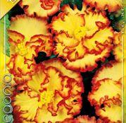 Bulbi de flori Begonia Crispa Marginata Yellow 3 buc