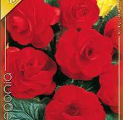 Bulbi de flori Begonia Large flower Red 3buc