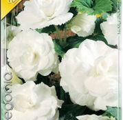 Bulbi de flori Begonia Large flower White 3buc