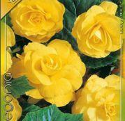 Bulbi de flori Begonia Large flower Yellow 3buc