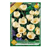 Bulbi de flori Brandusa Crocus Chrysanthus Cream Beauty 12buc