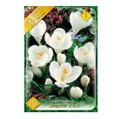 Bulbi de flori Brandusa Crocus Vernus Lage Flowering Jeanne d'Arc 10buc