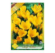 Bulbi de flori Brandusa Crocus Vernus Large Flowering Yellow 10buc