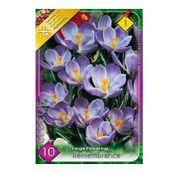 Bulbi de flori Brandusa Crocus Large Flowering Remembrance 10buc