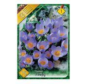 Bulbi de flori Brandusa Crocus Sieberi Firefly 15buc
