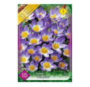 Bulbi de flori Brandusa Crocus Sieberi Tricolor 15buc