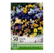 Bulbi de flori Branduse Crocus Species Mixed 50buc,100buc