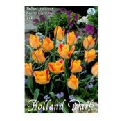 Bulbi de flori Lalea Botanical Bronz Charme 10buc