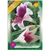 Bulbi de flori Crin LO hibrid Triumphator 1buc