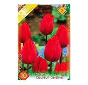 Bulbi de flori Lalea Couleur Cardinal 10buc