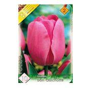 Bulbi de flori Lalea Don Quichotte  10buc