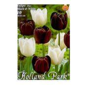 Bulbi de flori Lalea Duo Black & White 10buc