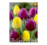 Bulbi de flori Lalea Duo Purple & Yellow 10buc